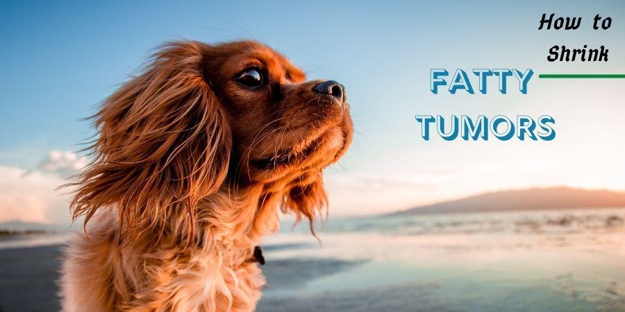 Dog's fatty lumps treatment